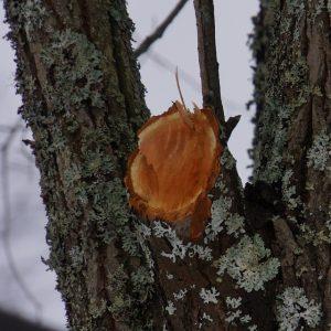 tree-stump-removal-sydney